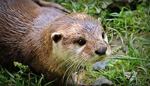 an otter looking cute